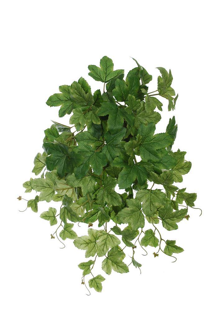 medium-grape-leaves-bush-green