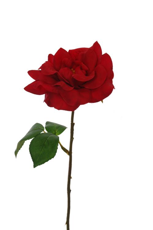 single-rose-red