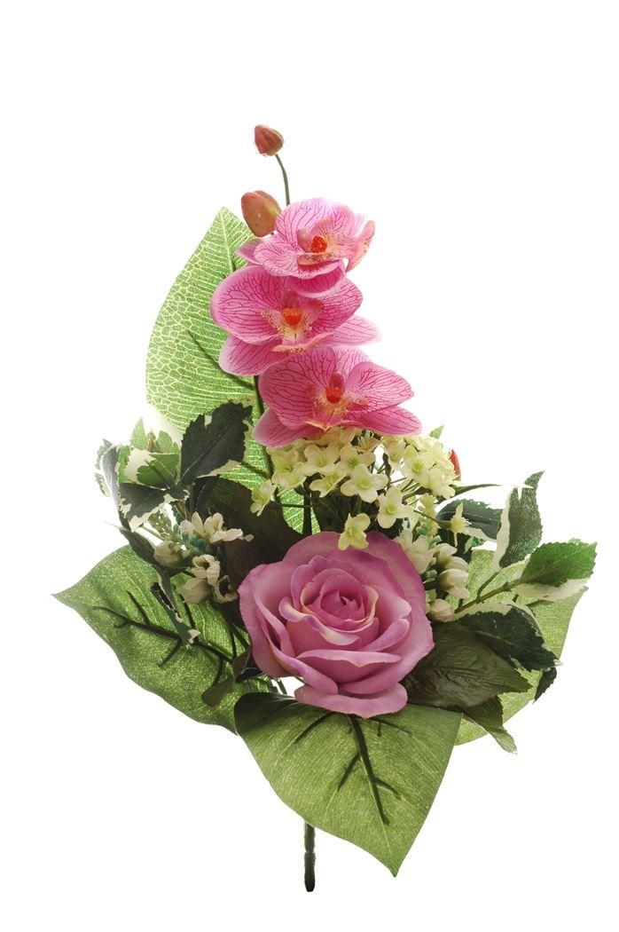 rose/orchid half bush x 6 lavander