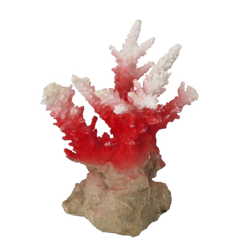 aqua d'ella coraal acropora rood