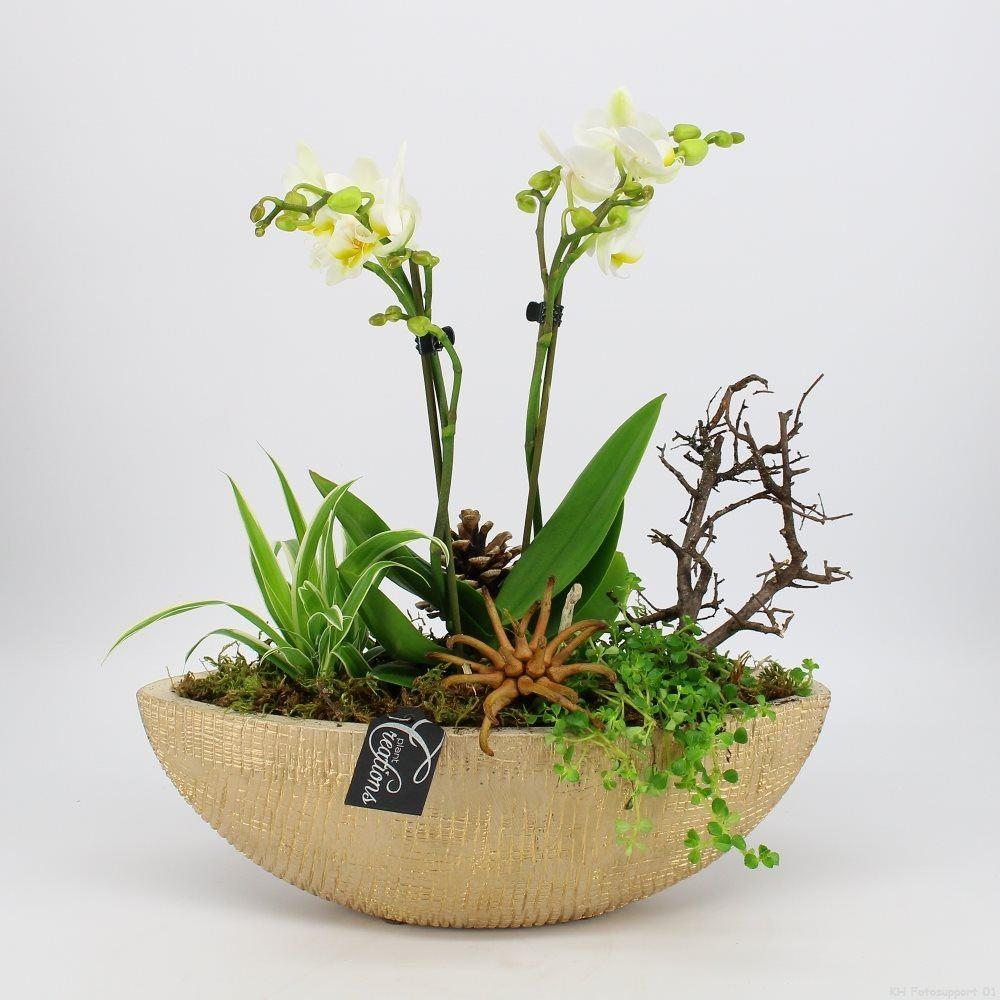 arrangement gemengd met phalaenopsis