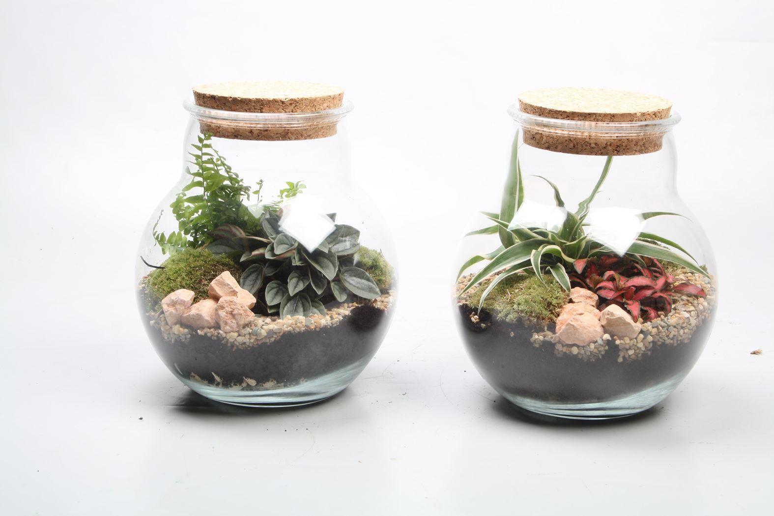 arrangement gemengd terrarium