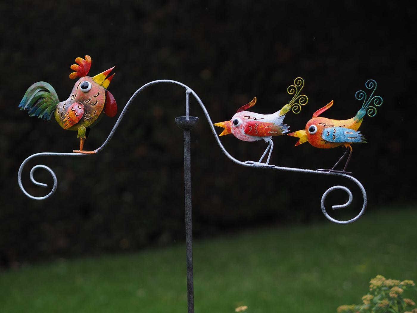 balans vogels/haan