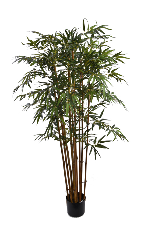 bamboo tree with 1300 leaves in pot green