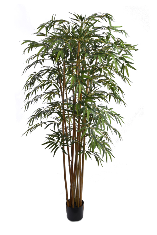 bamboo tree with 1700 leaves in pot green