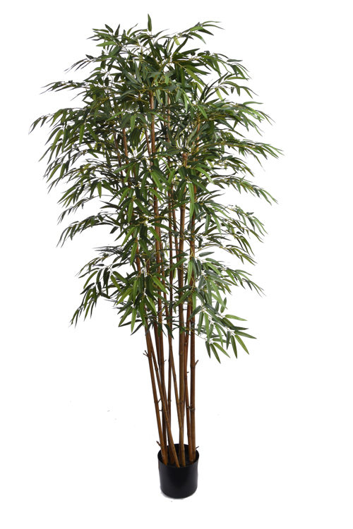 bamboo tree with 2275 leaves in pot green
