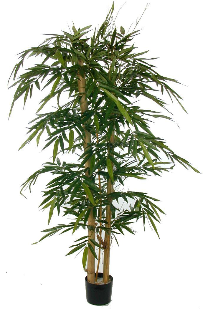bamboo w/giant trunks w/1152lvs green