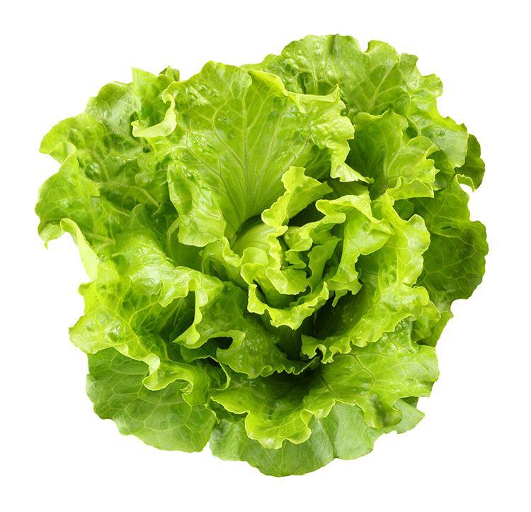 slaplanten batavia groen in setje (6sts)