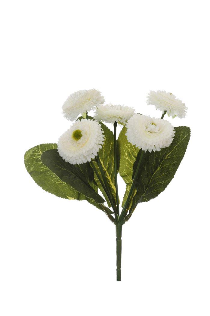 bellis bush x 5 cream