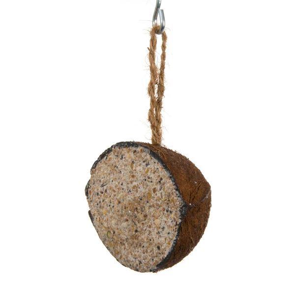 benelux halve kokosnoot met meelwormen