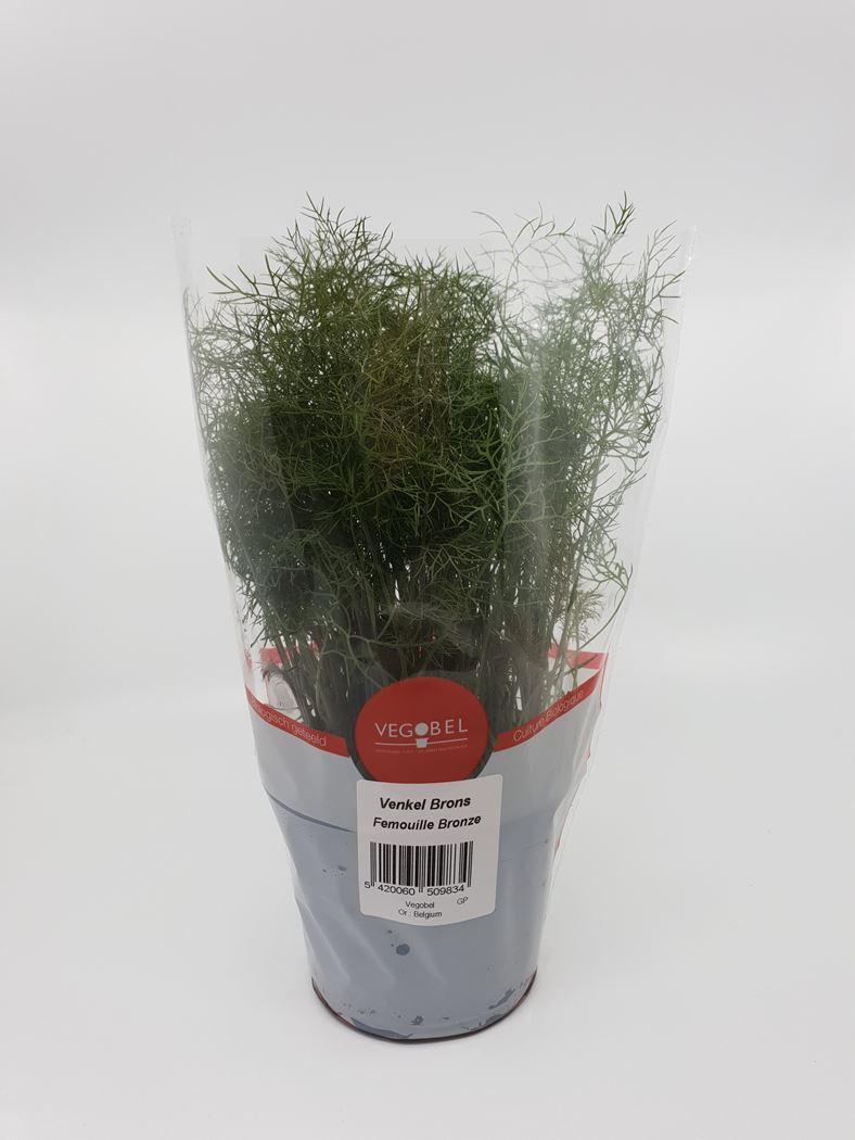 bio foenicilum vulgare (venkel)
