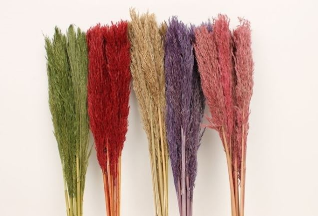 bundle of grass mixed colours