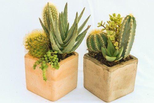 cactus arrangement cube