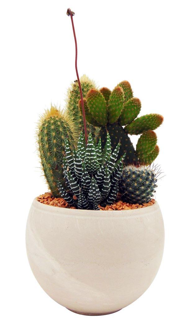 cactus arrangement sfera