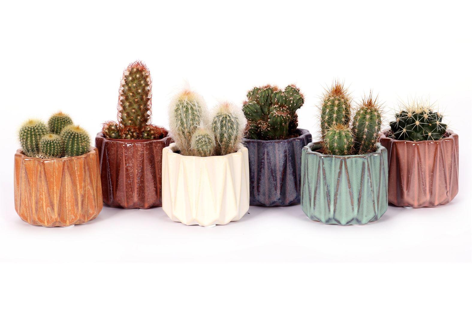 cactus gemengd in avignon keramiek