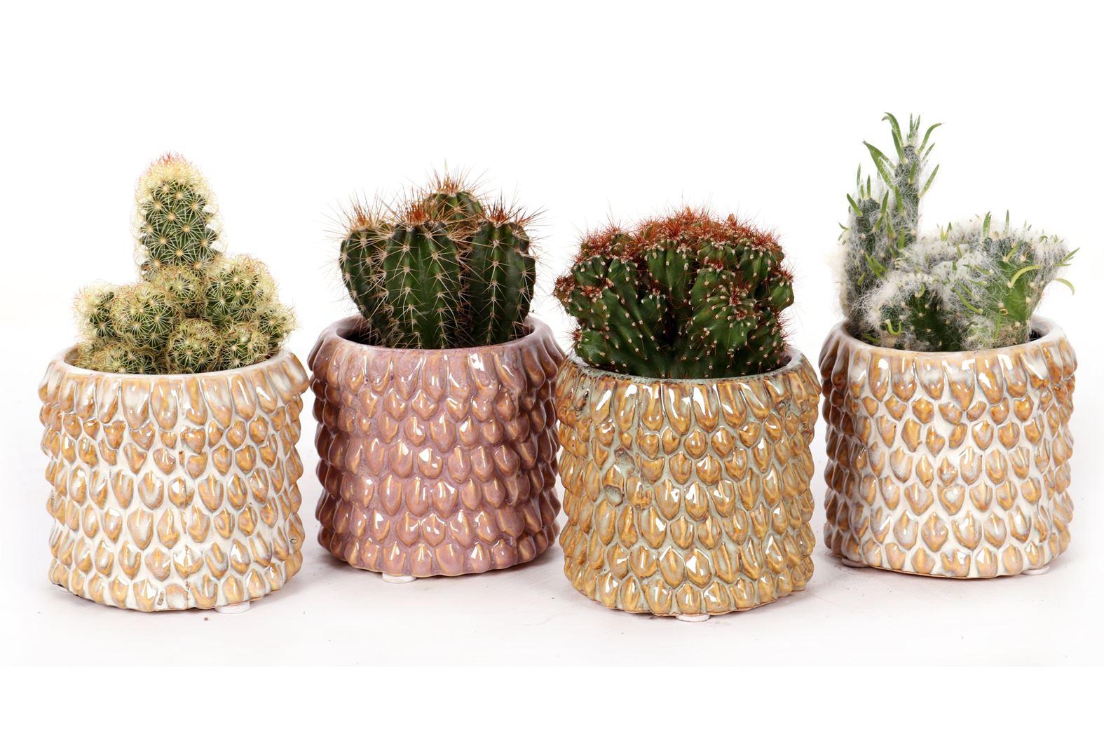 cactus gemengd in casablanca keramiek