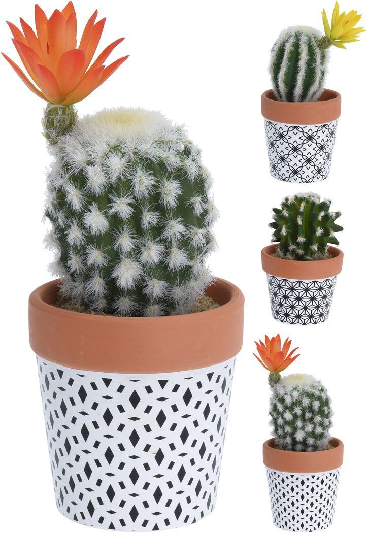 cactus in gekleurde pot