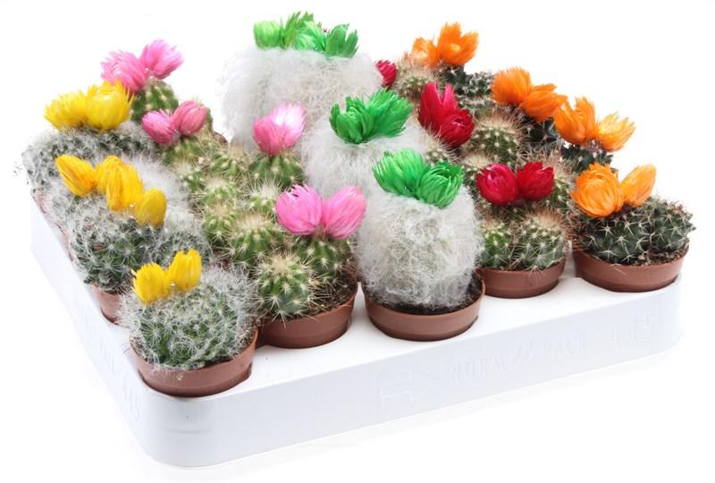 cactus versierd met strobloemen