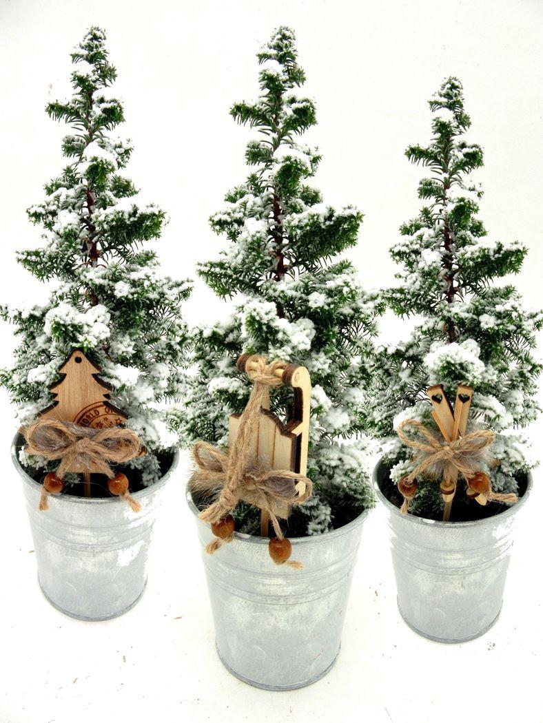 chamaecyparis 'top point' met sneeuw in wax zink met skie, slee of boom bijsteker