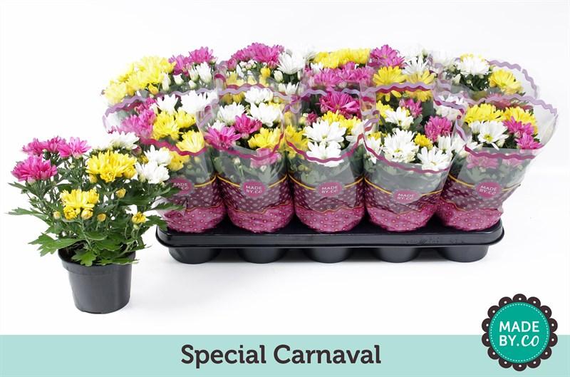 chrysant carnaval
