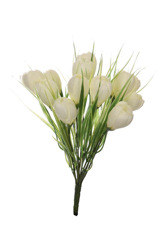 crocus bush x 12 cream
