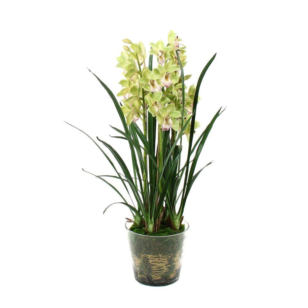 cymbidium gemengd 5 bloemstelen