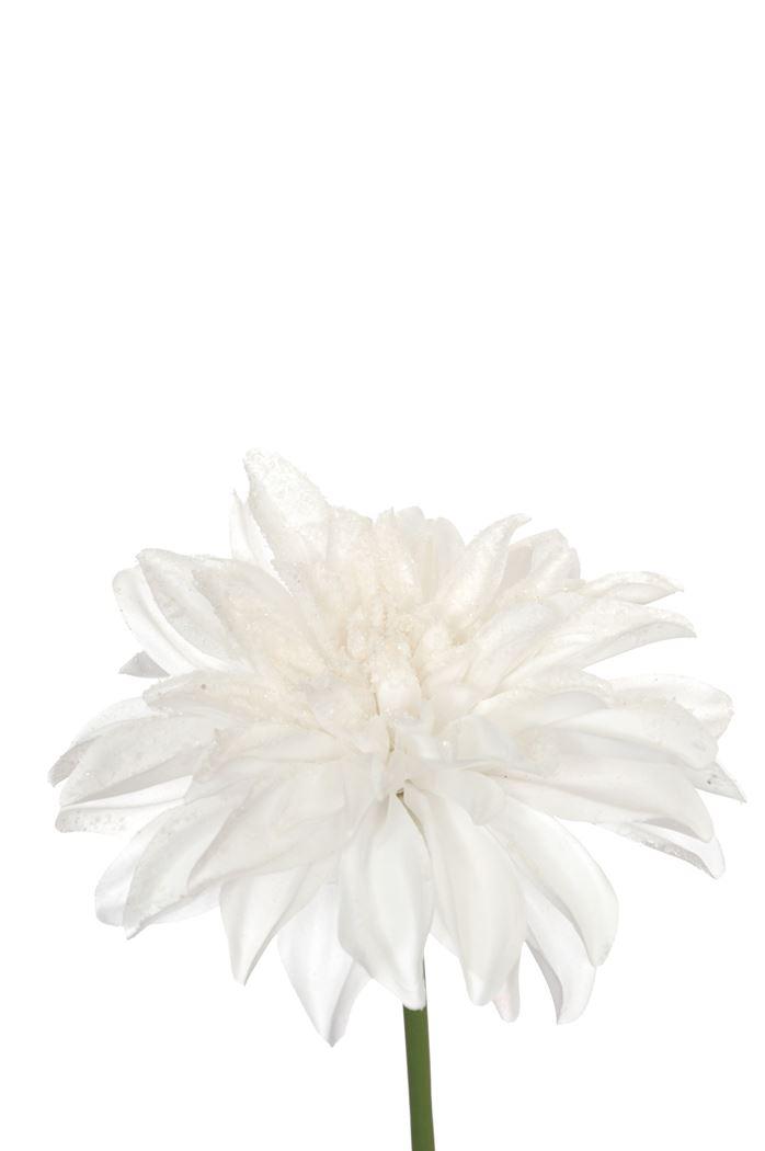dahlia w/ice and glitter white