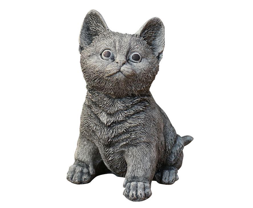 dbg kat zit klein