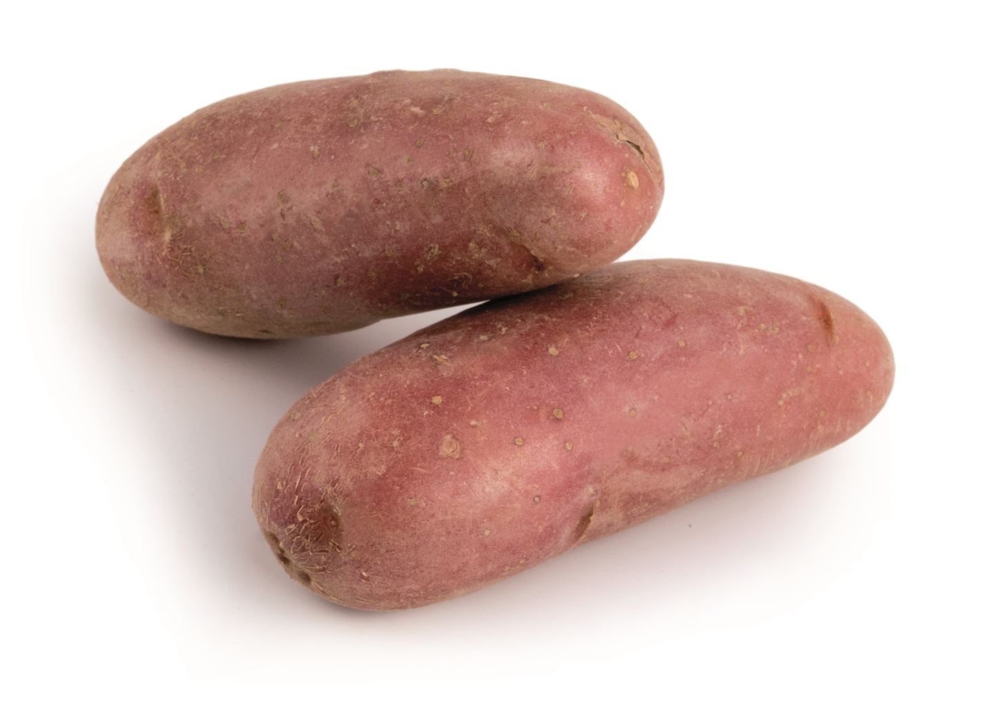 debaere pootaardappel cherie france (peau rouge) (25/30mm)