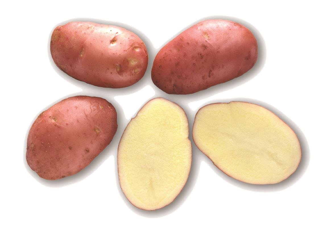 debaere pootaardappel désirée hollande (peau rouge) (28/35mm)