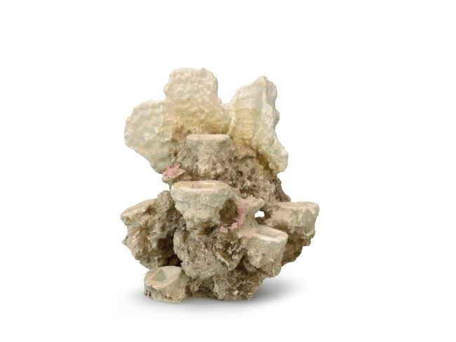 aqua d'ella deco - coral reef for 6 corals