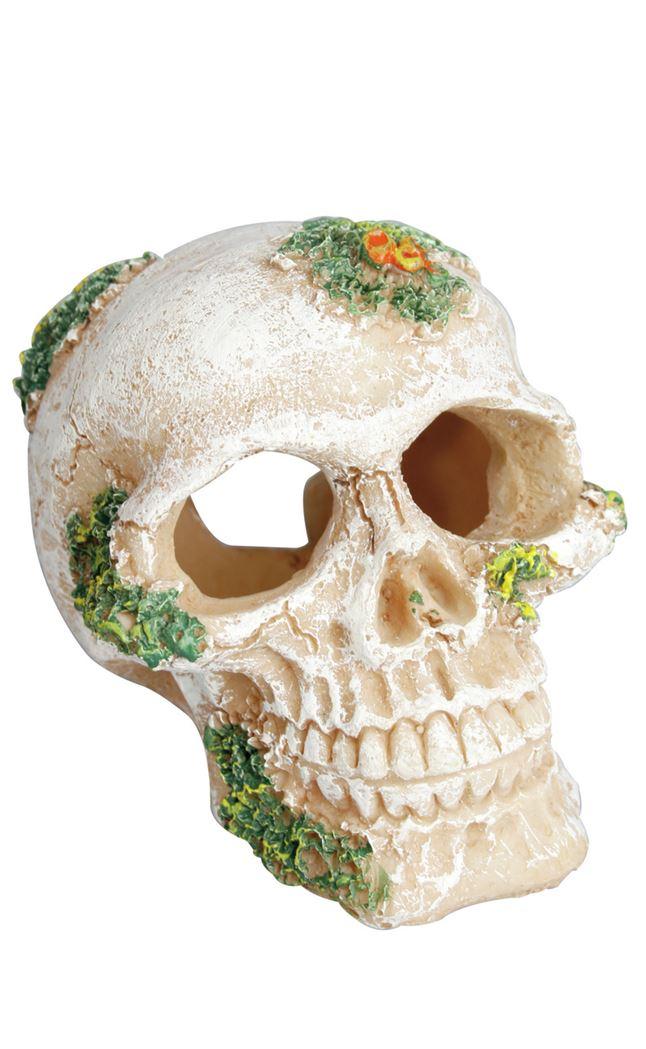 decoratie - skull