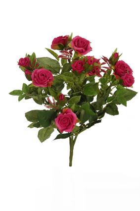 diamond rose bush x 5 beauty