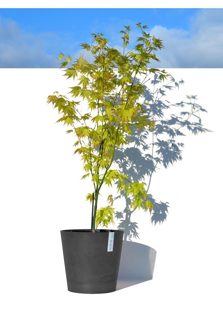 ecopot's venice met onderschotel voor waterreserve dark grey