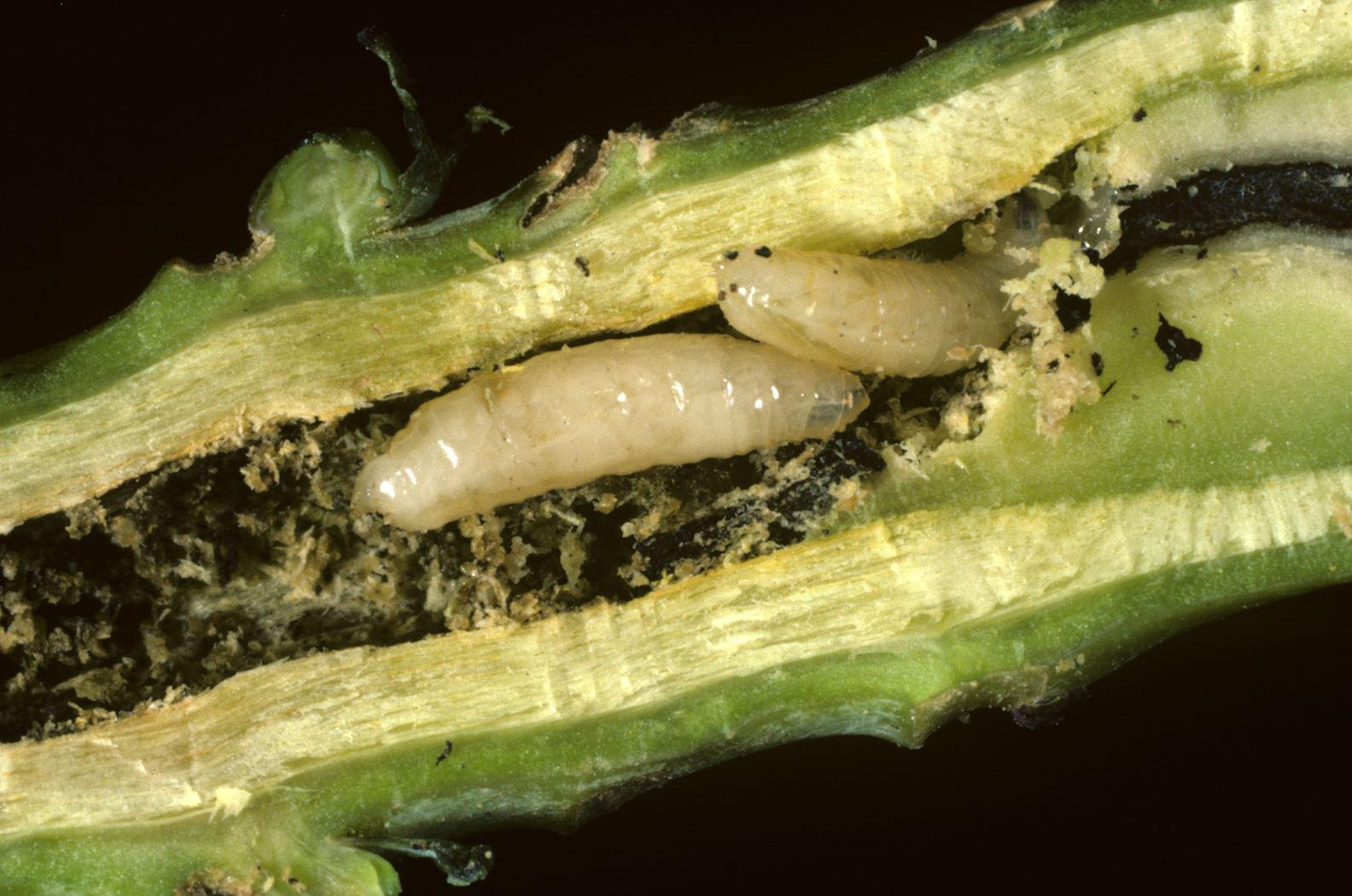 ecostyle aaltjes tegen schadelijke bodeminsecten