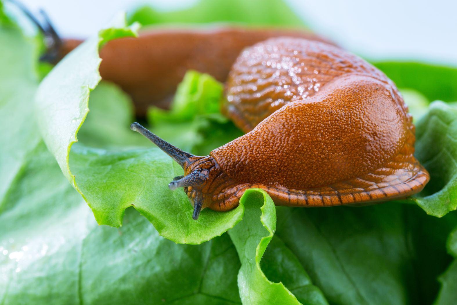 ecostyle aaltjes tegen slakken