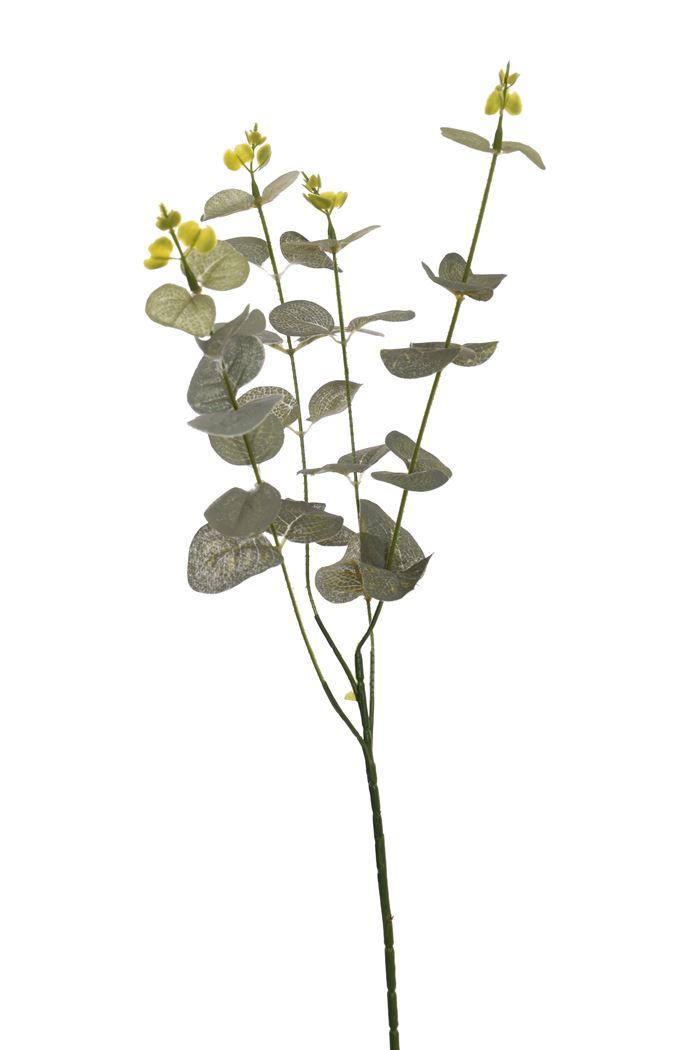 eucalyptus x 4 grey