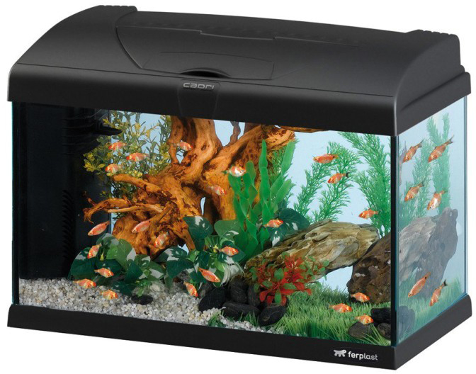 ferplast aquarium capri 60 led zwart