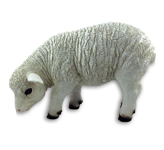 friendly lamb eating
