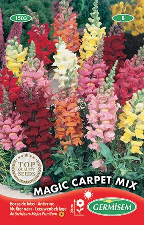 germisem antirrhinum lage magic carpet mixed