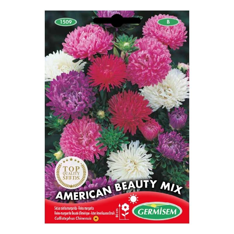 germisem callistephus (aster) amerikaanse beauty gemengd
