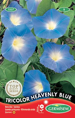 germisem ipomea (klimmende winde) tricolor heavenly blue
