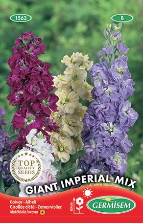 germisem matthiola (zomerviolier) giant imperial gemengd