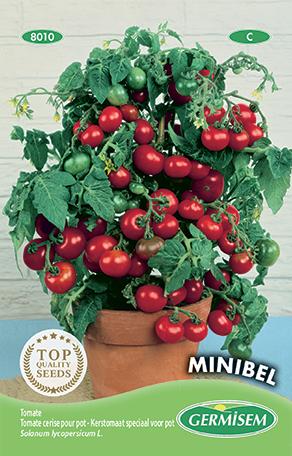 germisem tomaat kers minibel (speciaal voor pot)