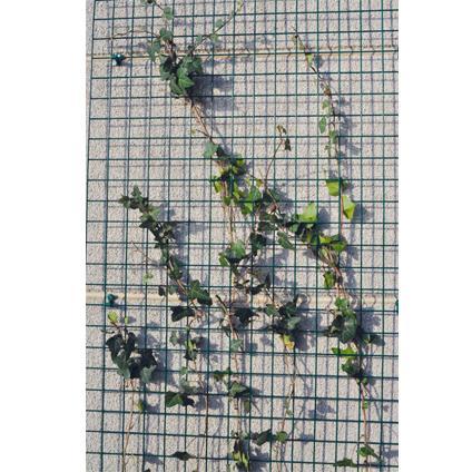 giardino draadpaneel bologna groen geplastificeerd