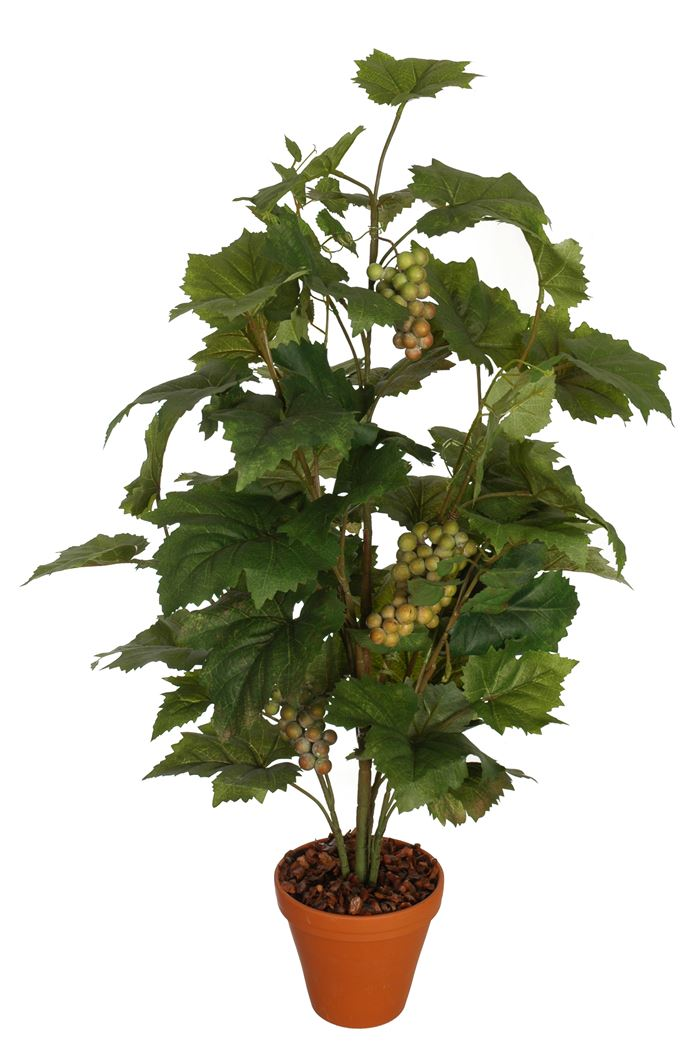 grape leaves plant x 7 in pot green