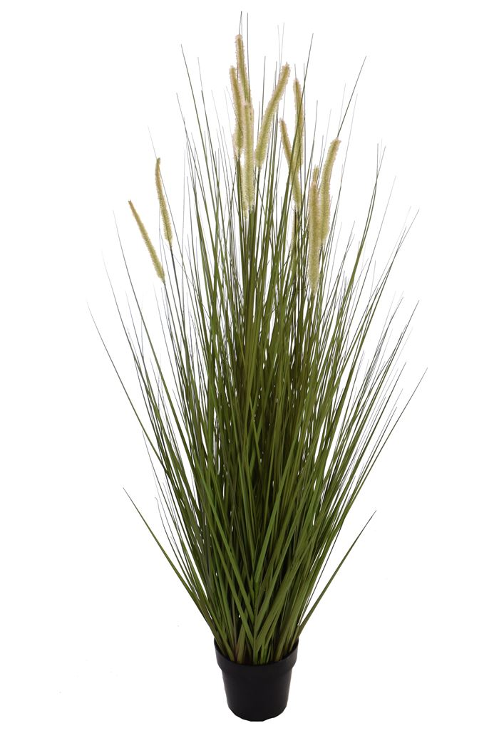 grass with cattail in pot green