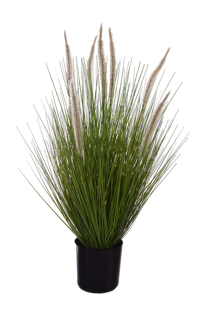 grass with foxtail in pot green
