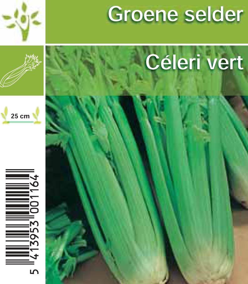 groene selder in setje (6sts)