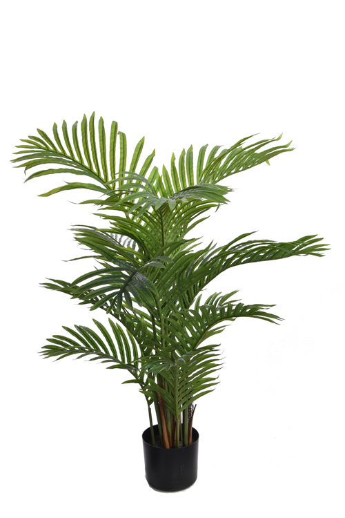 hawaiian palm tree with 12 leaves in pot green
